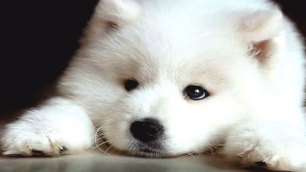 Most expensive dogs in world will cost you plenty of cash | WCHS