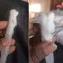 Virginia Beach woman finds hook inside tampon