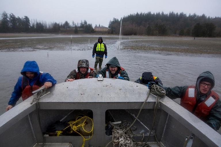 Workers launch a boat to take a tour of Taylor Shellfish Farms' Samish Bay sites. (Sy Bean / Seattle Refined)