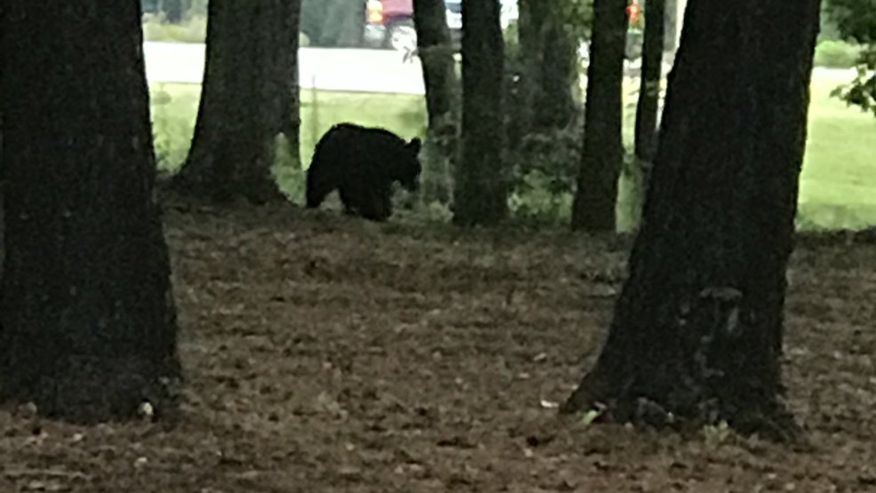 Submitted _ Bear sighting in Myrtle Beach _ 6.13.18.jpg