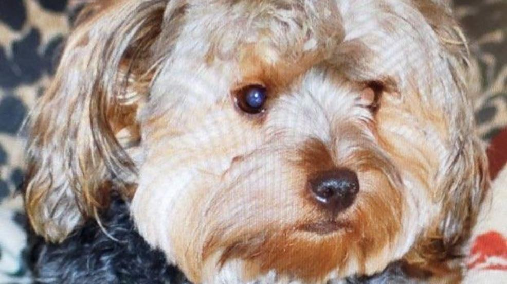 California Dog Missing For Nine Years Finds Furever Home In Idaho Kval
