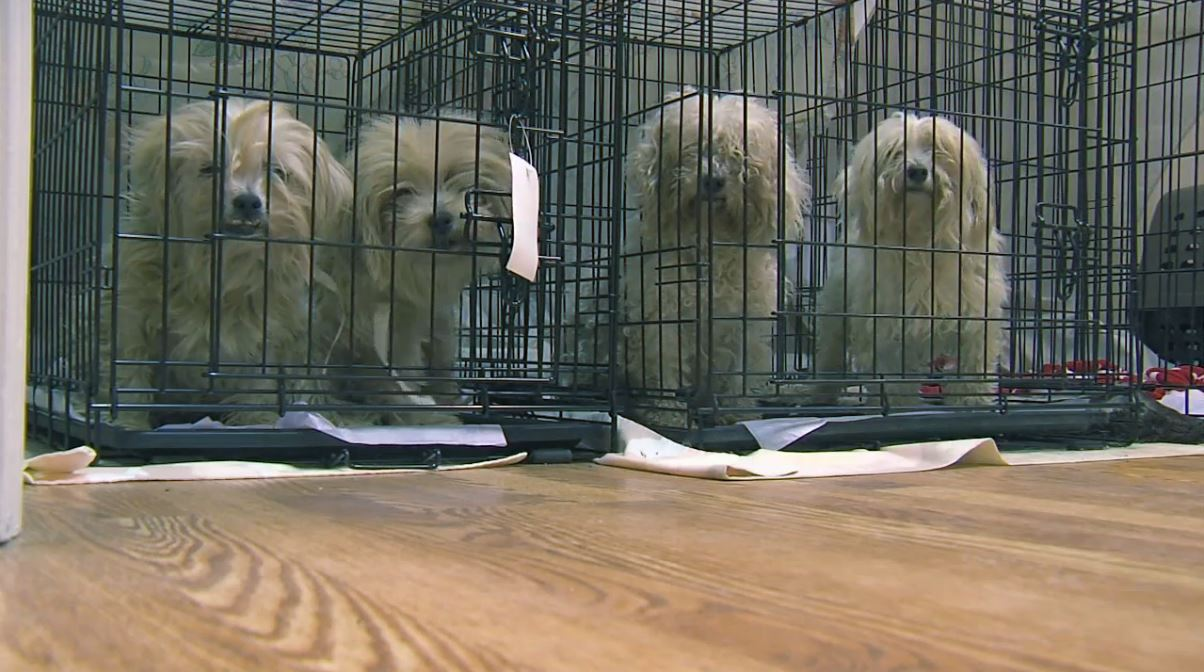 Charleston-based rescue has taken over 130 animals into custody from commercial breeder (WCIV)
