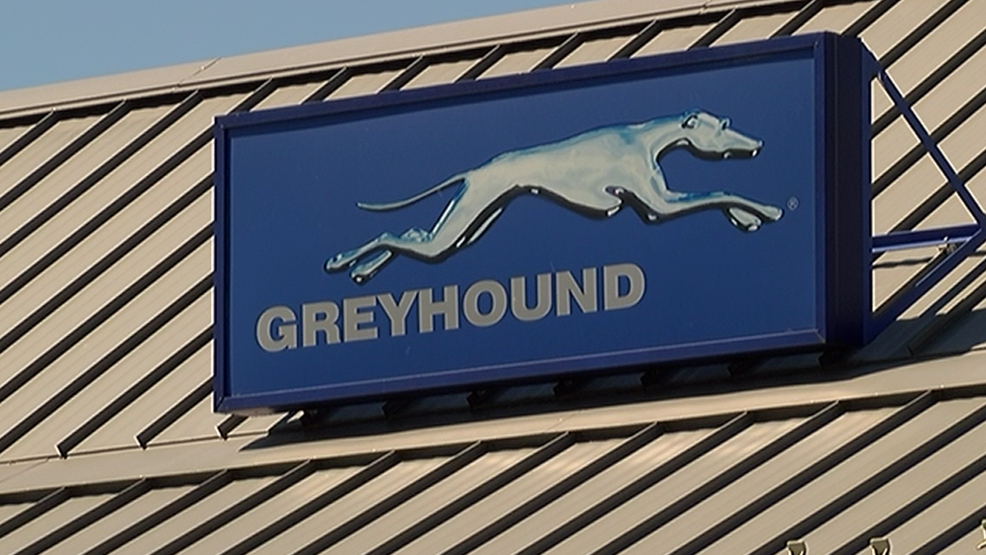 Greyhound.png
