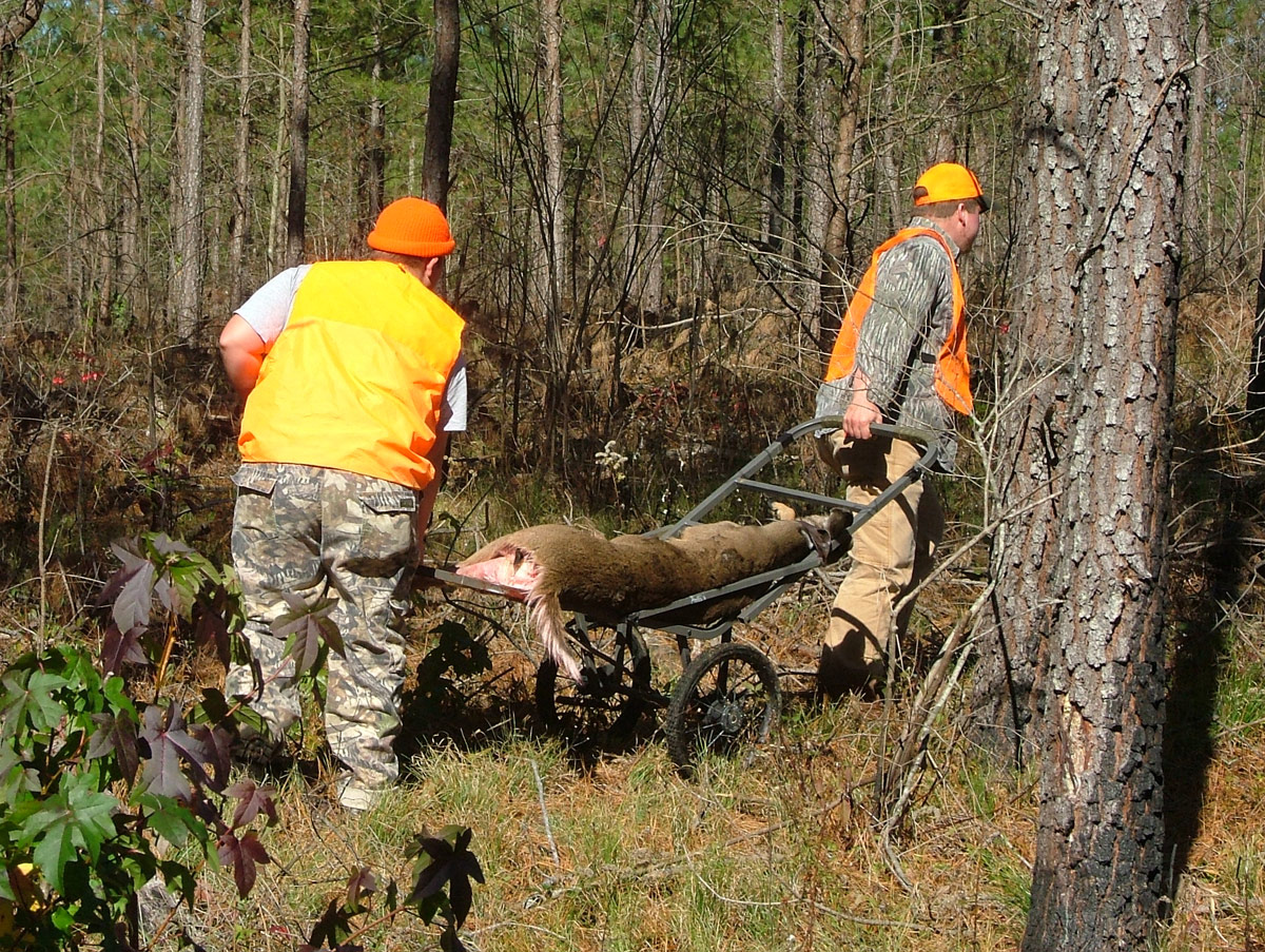 Before 1997 250,000 acres of land owned by Bowater Paper Company in Tennessee were open to public hunting. Most was in pine plantations, harvested to make newsprint at the time. But there were still plenty of surrounding hardwoods and habitat for whitetail deer. (Photo: Richard Simms)