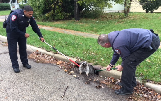 According to the Zion Police Department, one of its officers responded to a call for assistance Friday morning for a furry friend. When the officer arrived he found a raccoon stuck in a sewer drain. (Photo courtesy of Zion P.D.)