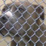 Pit bulls will be legal again in Yakima starting Sunday