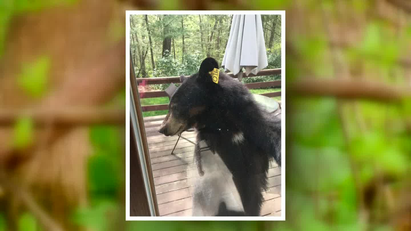 A bear appeared at the back door of a Connecticut familyu0027s home. & Hello there bear: Conn. family has unexpected guest | WJAR
