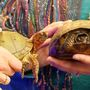 Turtle Time with Center for Wildlife