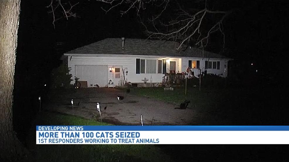Calhoun Co. Refugio de animales en busca de ayuda para cuidado de los gatos salvo ... - WWMT-TV 1