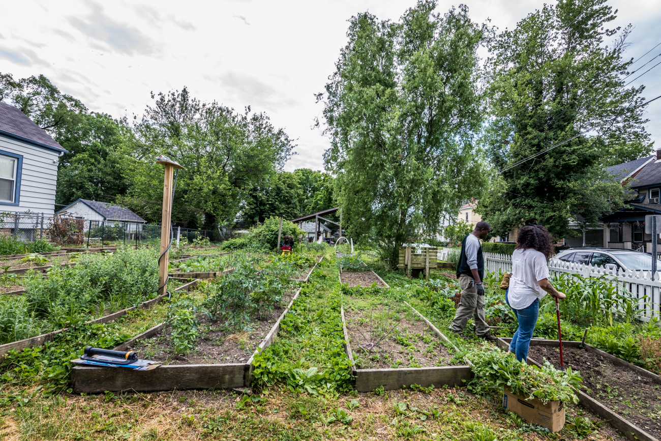 Brick Gardens is a social enterprise that turns vacant spaces into indoor, vertical, hydroponic (the process of growing plants without soil) gardens that aim to feed local communities in food deserts. The organization has various garden projects in place at the time of this writing, including one in Madisonville (pictured throughout the gallery), Bond Hill, Roselawn, and one on Xavier University's campus with plans to add a site in Lincoln Heights. ADDRESS: 5303 Ward Street (45227) / Image: Catherine Viox // Published: 7.1.20