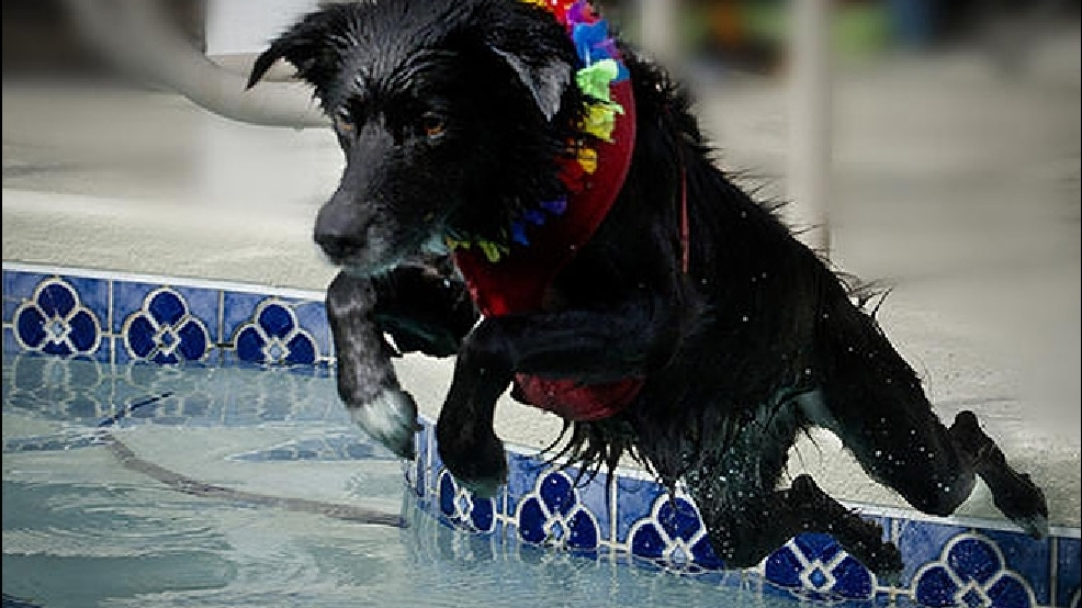 how to keep my dog cool in hot weather
