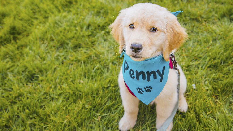 RUFFined Spotlight: Penny the Golden Retriever