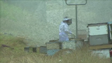 Truck carrying millions of bees overturns on Texas highway