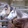 Bureau of Land Management hosts wild horse and burro sale