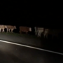 I-10 cattle truck crash: Driver severely injured, 32 cows dead