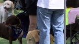 Dogs and owners enjoy day at Roxbury Park
