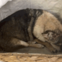 DC Humane Rescue seeking information on dog left outside facility tied in 2 bags