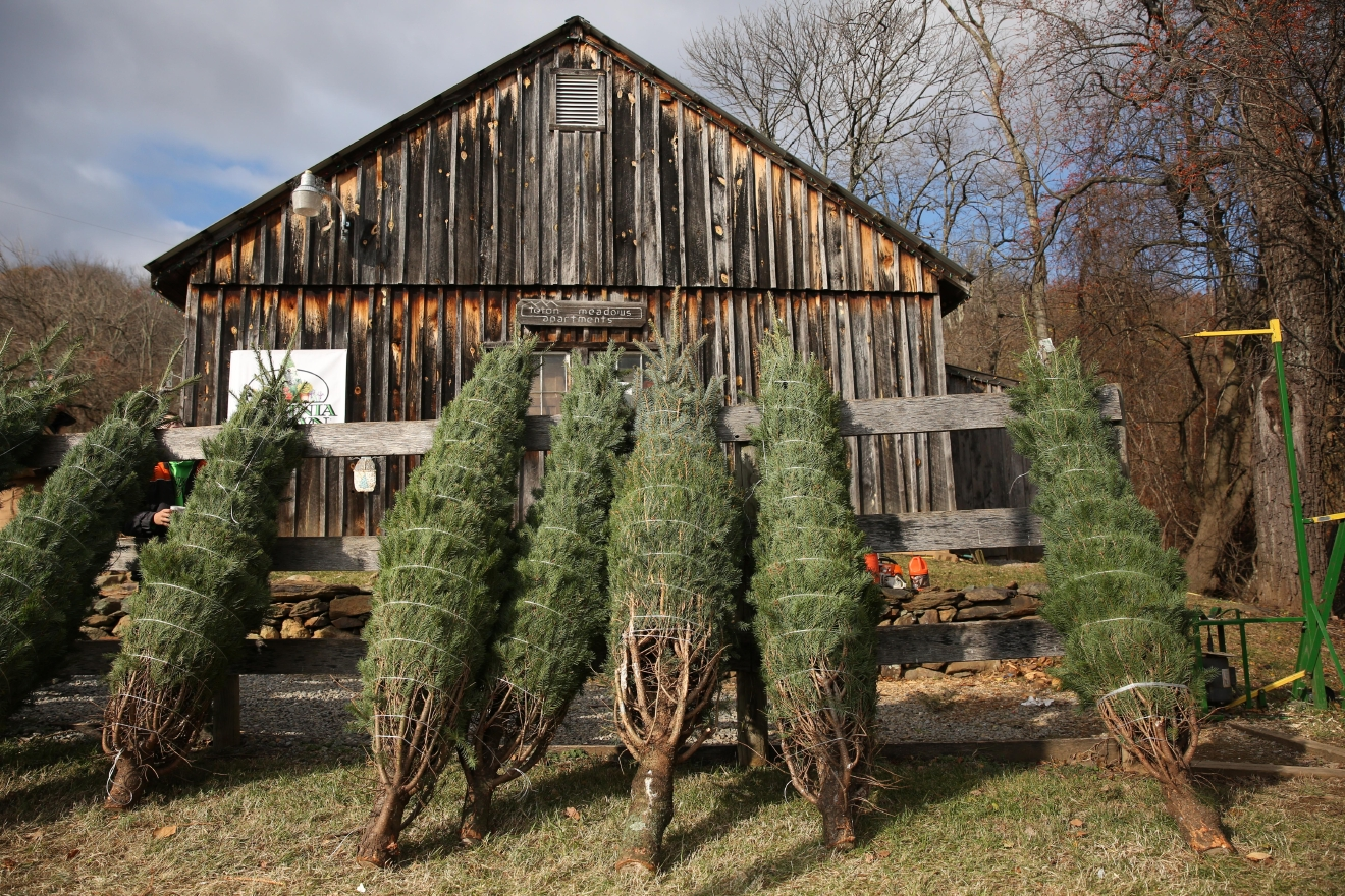 Snickers Gap Christmas Tree Farm (Amanda Andrade-Rhoades/DC Refined)