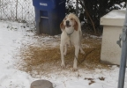 Bryant-Dog chained in the cold.jpg