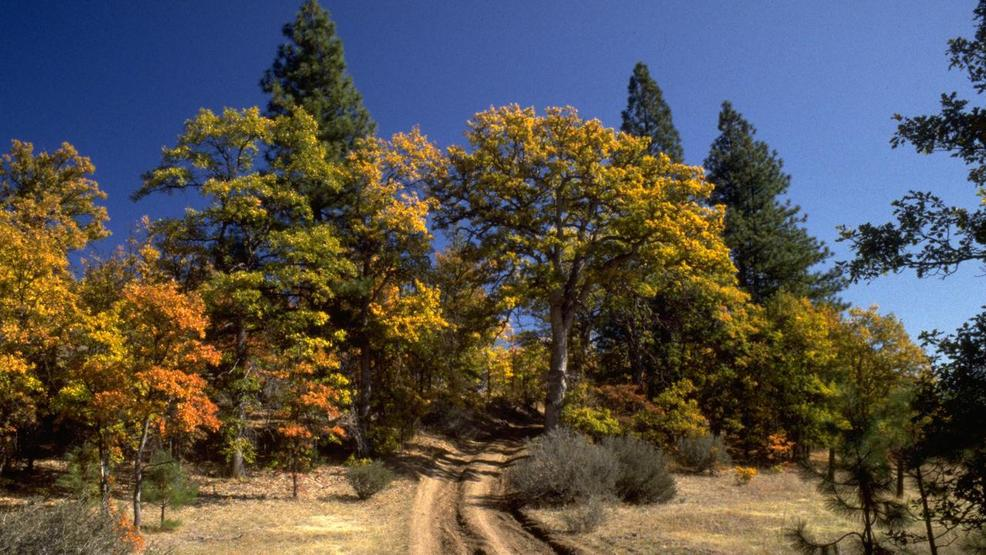 Cascade-Siskiyou National Monument litigation could resume | KATU