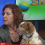 Rescuing Brittany dogs across the globe