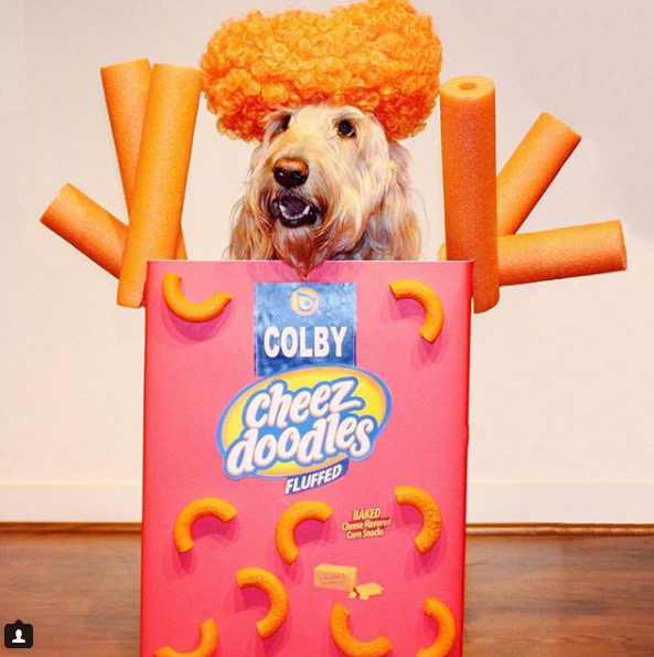 When your costume matches your Instagram handle, you win! (Image: via IG user @colbycheesedoodle){ }