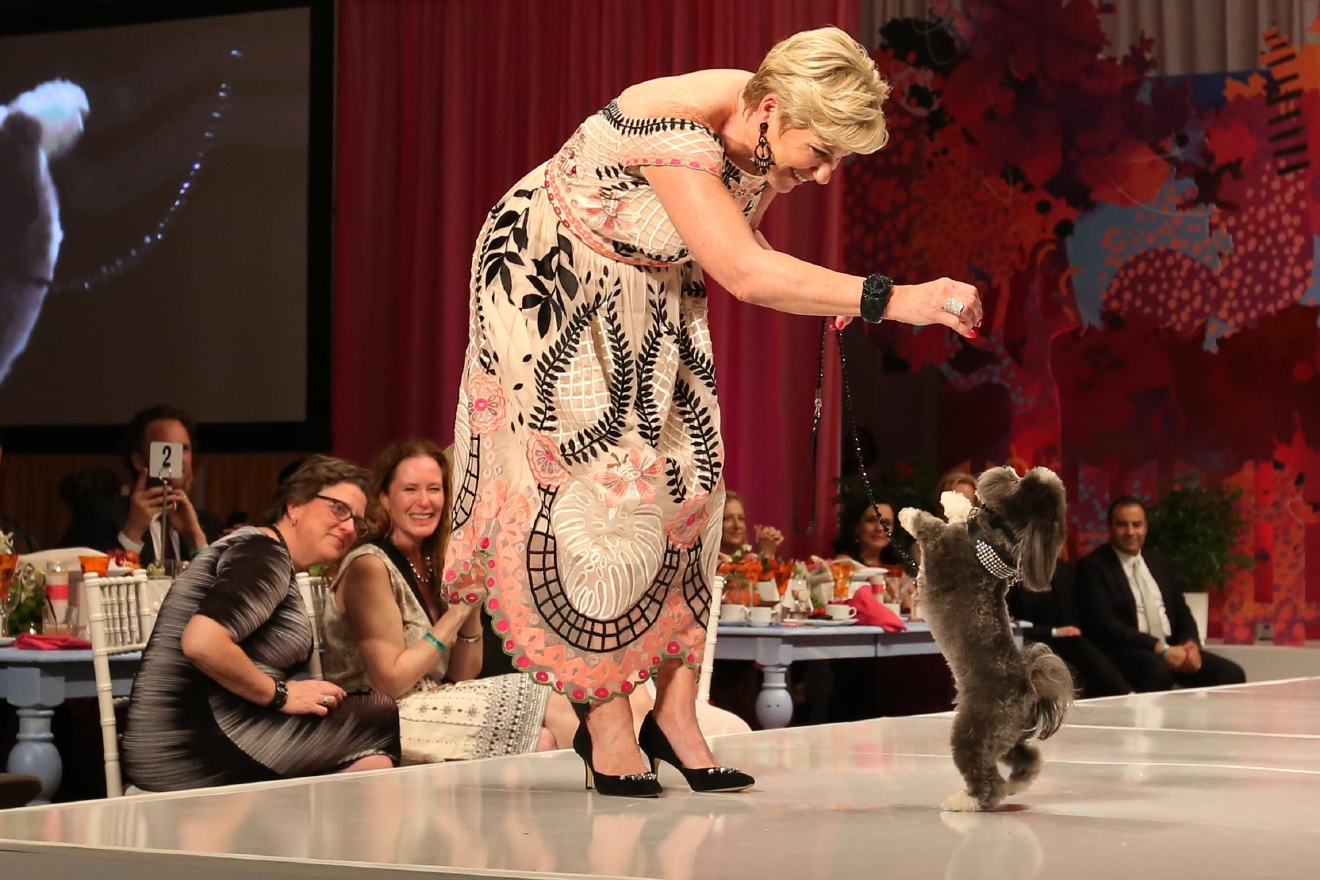 Hundreds of animal-lovers gathered to watch their peers sashay down the runway with decked out dogs on for Fashion For Paws, a charity event which benefits the Washington Humane Society, on April 23.  (Amanda Andrade-Rhoades/DC Refined)